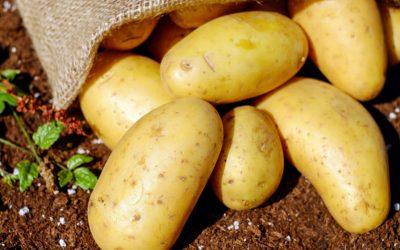 Compensatie voor siertelers en telers van fritesaardappelen